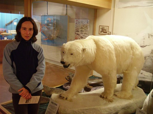 Polar bear at Husavik museum